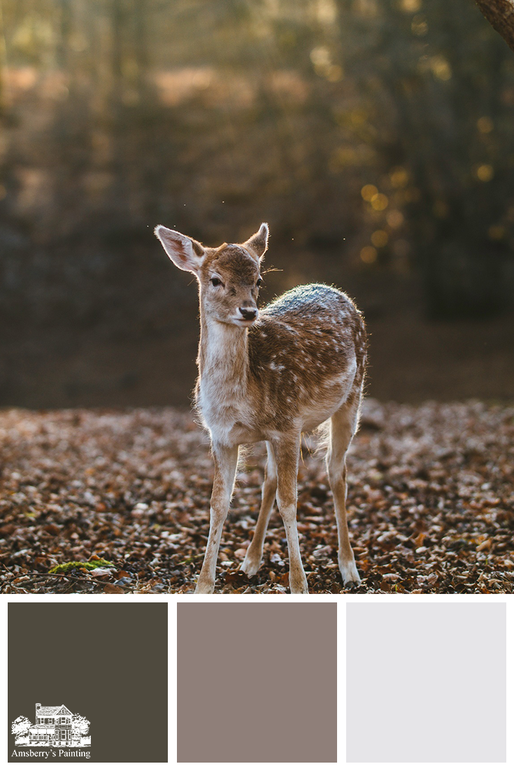 Color Palette // Spotted Fawn SW7048 Urbane Bronze, SW2818 Renwich Heather, SW6525 Rarified Air