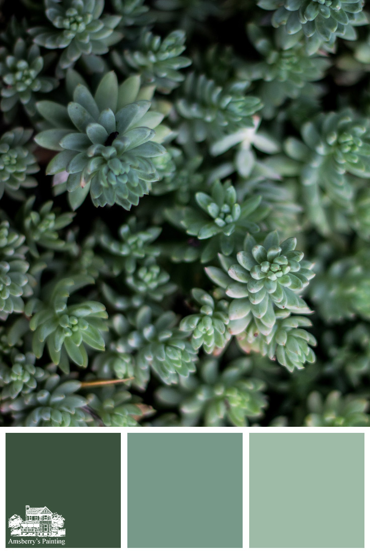 Color Palette // Bed of Green SW6461 Isle of Pines, SW9042 Verdigreen, SW6464 Aloe