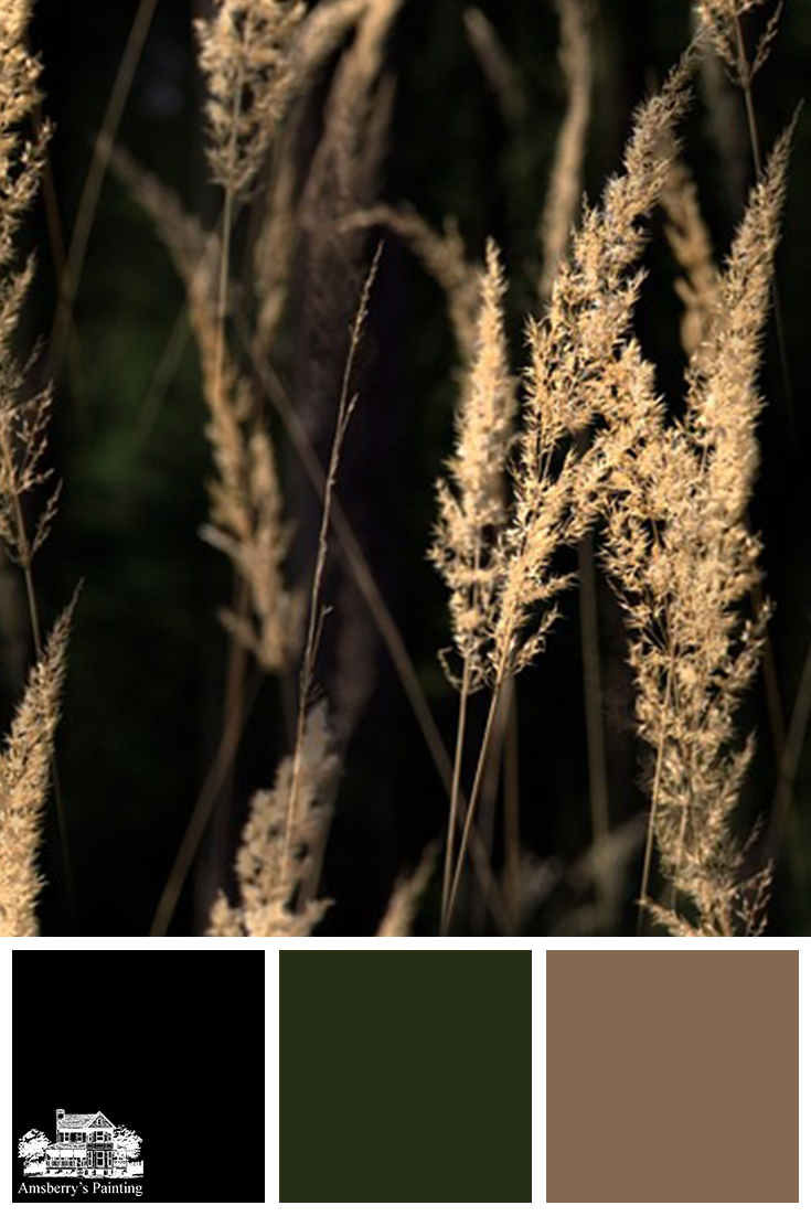 Color Palette // Golden Growth SW6258 Tricorn Black, SW2847 Roycroft Bottle Green, SW6145 Thatch Brown
